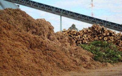 Coordenação da Subcomissão da Biomassa para Energia da PARF