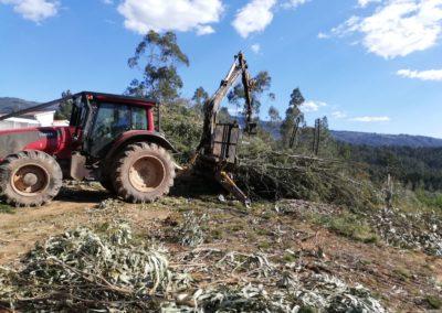 Disponibilidade de biomassa